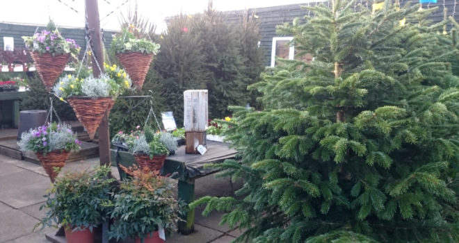 Xmas trees and hanging baskets